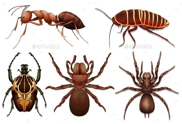 GraphicRiver Different Insects 11468727