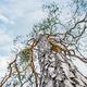 pine tree with tree mushroom on blue sky - PhotoDune Item for Sale