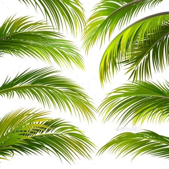 GraphicRiver Palm Leaves Vector 11469563
