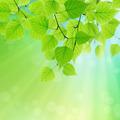 Green leaves - PhotoDune Item for Sale