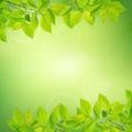 Summer leaves - PhotoDune Item for Sale