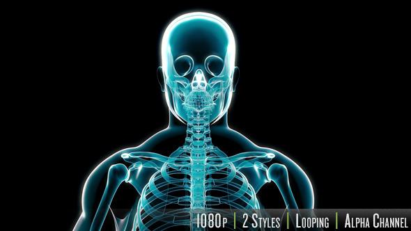 X-Ray of Human Skeleton