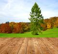 Autumn in the Park  - PhotoDune Item for Sale