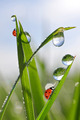 Fresh green grass with dew drops - PhotoDune Item for Sale