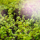 Green Leaves Close-Up With Bright Sunlight - PhotoDune Item for Sale