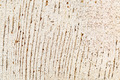 grunge white painted barn wood texture - PhotoDune Item for Sale