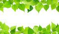 Green frame - PhotoDune Item for Sale