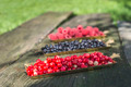 Red and black raspberry and blueberry - PhotoDune Item for Sale
