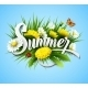 Fresh Summer Background With Grass, Dandelions - GraphicRiver Item for Sale