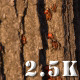 Red Bugs on Tree Bark - VideoHive Item for Sale
