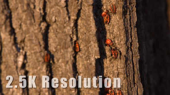 Red Bugs on Tree Bark