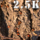 Red Bugs on Tree Bark 2 - VideoHive Item for Sale