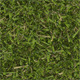 Seamless texture of the lawn grass