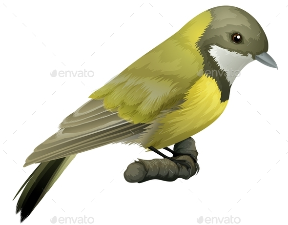 GraphicRiver Australian Golden Whistler 11503309