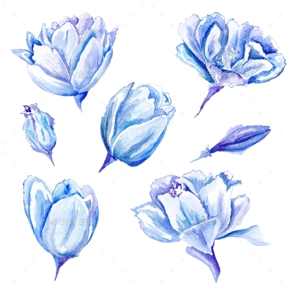 GraphicRiver Set Of Watercolor Hand-Painted Tulips 11507889