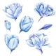 Set Of Watercolor Hand-Painted Tulips  - GraphicRiver Item for Sale