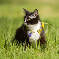 black cat playing on green grass lawn - PhotoDune Item for Sale