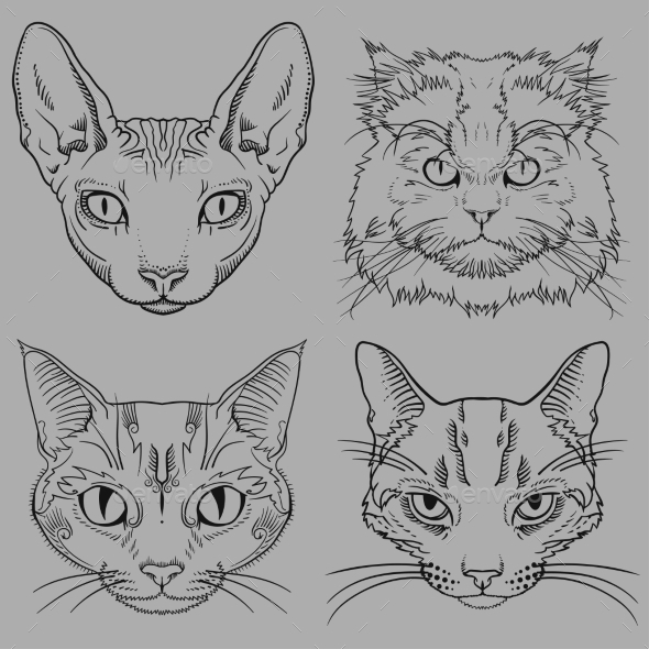 GraphicRiver Wild Cat Portraits Isolated 11511800