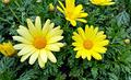 Bright yellow flowers - PhotoDune Item for Sale