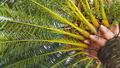 Branches of big palm tree - PhotoDune Item for Sale