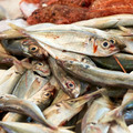 fresh mackerel - PhotoDune Item for Sale