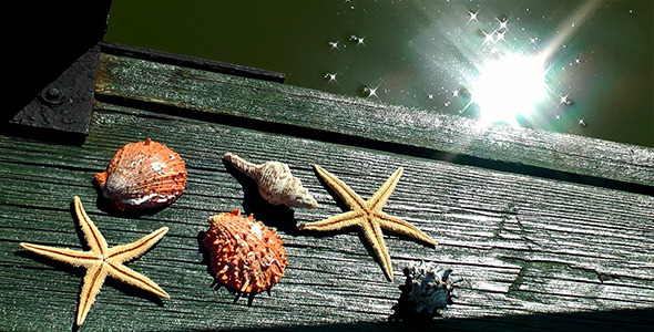 Sea Shells and Starfishes on Wood Pier