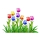 Tulips - GraphicRiver Item for Sale