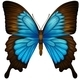 Blue Mountain Swallowtail - GraphicRiver Item for Sale