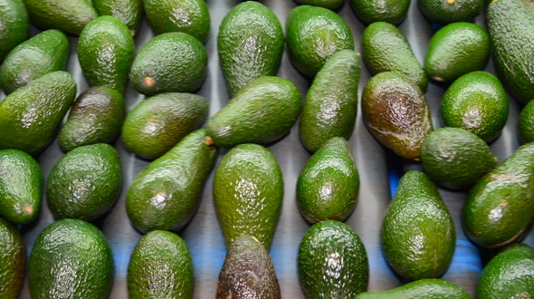 Avocado Hass Fruit Rolling in Industrial Line