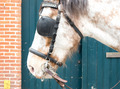 Horse With Bridle - PhotoDune Item for Sale