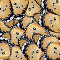 exotic color butterfly wing - PhotoDune Item for Sale