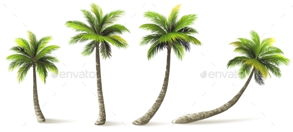 GraphicRiver Palm Trees 11526694