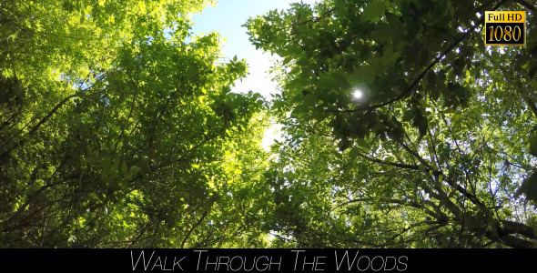 VideoHive Walk Through The Woods 10 11527327