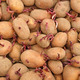 Pile of potato tubers germinated sprouts - PhotoDune Item for Sale