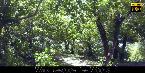 VideoHive Walk Through The Woods 14 11528007