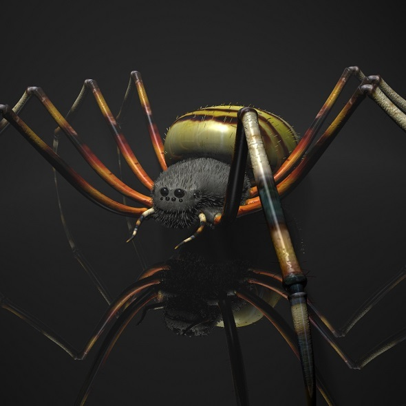 Spider Tiger Rigged - 3DOcean Item for Sale
