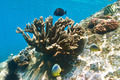 Coral reef and fish - PhotoDune Item for Sale
