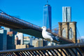 Seagull with Manhattan in background. - PhotoDune Item for Sale