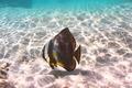 Tropical reef fish - PhotoDune Item for Sale