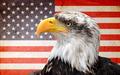 North American bald eagle - PhotoDune Item for Sale