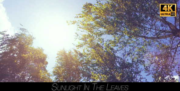 Sunlight In The Leaves 5