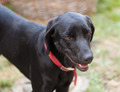 Black dog - PhotoDune Item for Sale
