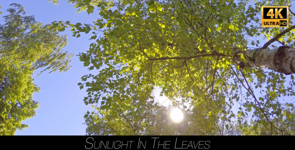 Sunlight In The Leaves 6