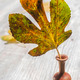 Small wooden vase with autumn leaf - PhotoDune Item for Sale