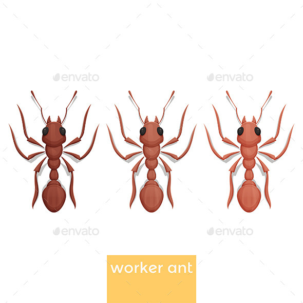 GraphicRiver Worker Ant 11532345