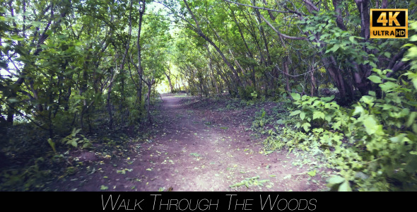 Walk Through The Woods 11