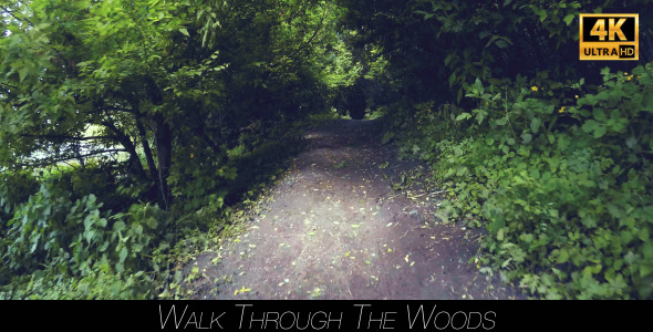 Walk Through The Woods 12