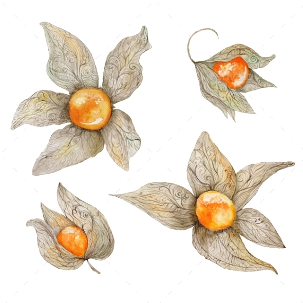 Watercolor Physalis Plant