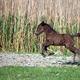 brown foal running on field - PhotoDune Item for Sale