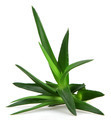 Aloe vera plant - PhotoDune Item for Sale
